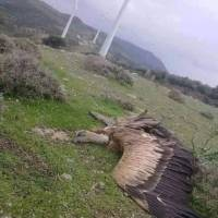 Ας είναι καλά οι ανεμογεννήτριες που προστατεύουν το περιβάλλον!!!